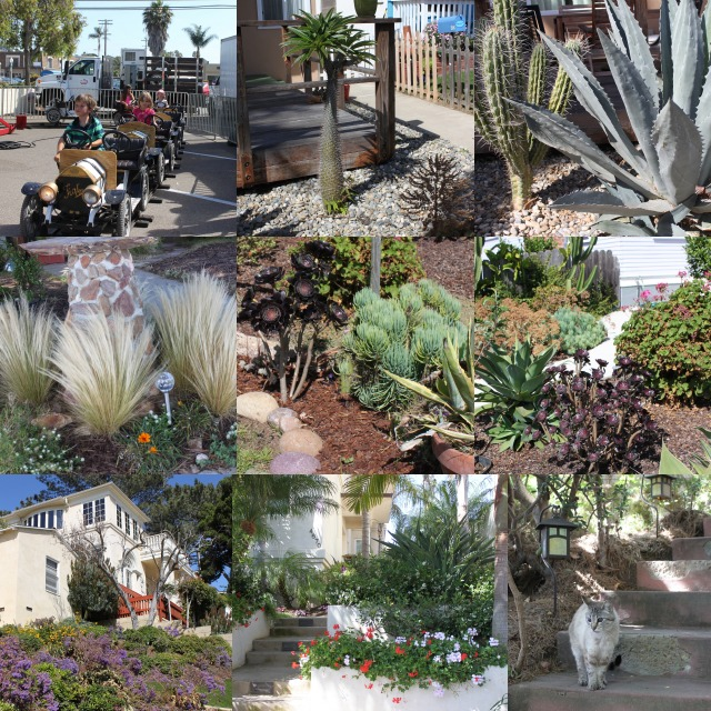 As you walk around town, you'll see many front yards with some of the most beautiful plants.