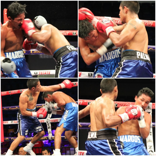 "If you left the building early, you missed the ""Bout of the Night"". The match between Margas Randel Mendoza (blue trunks, white trim) and the free swinging Palma (dark blue trunks, black trim) was a furious and memorable battle of stamina and courage. All photos: Jim Wyatt"